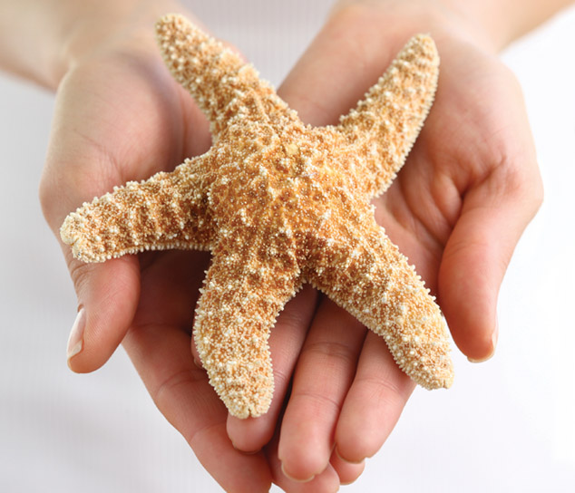 Hands holding star fish
